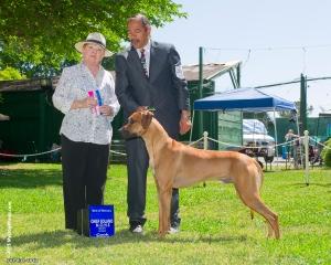 Dante' best of winners and best of breed-owner handler