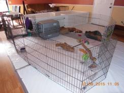 puppy set up