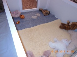 pups whelping box