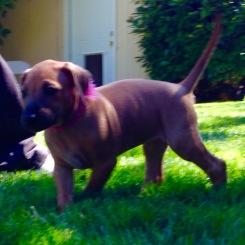 pups outside-4