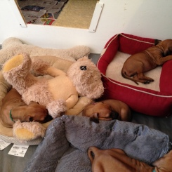 pups sleeping-2