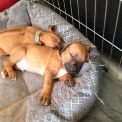 pups sleeping 4wk