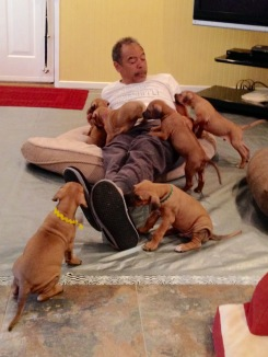 roy and pups-2