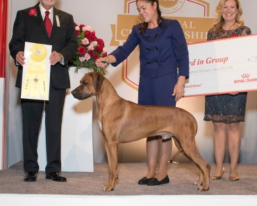 Rugby best of breed and third in group at AKC national dog show 2016