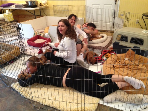 Had a great visit last week-end with Dawn and family. Puppies were in heaven with lots of kisses and cuddles